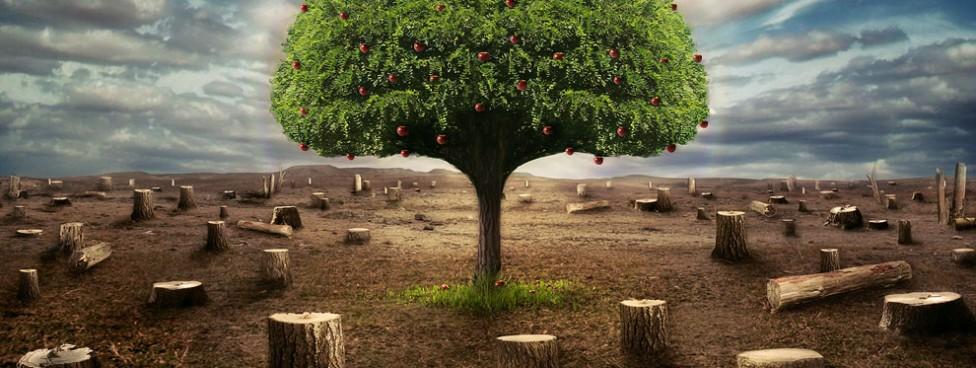 Program do opłat za korzystanie ze środowiska